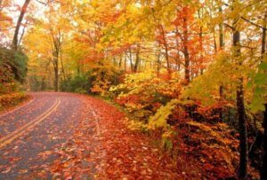 Осенние каникулы в Краснодарском крае